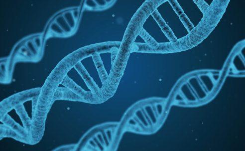 Wenn die Ursache in den Genen liegt – Neues zu Erbkrankheiten beim Rind