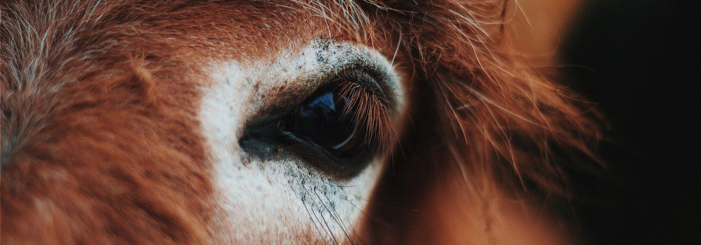 Der Grat wird schmaler – immer weniger verfügbare Arzneimittel für Pferde
