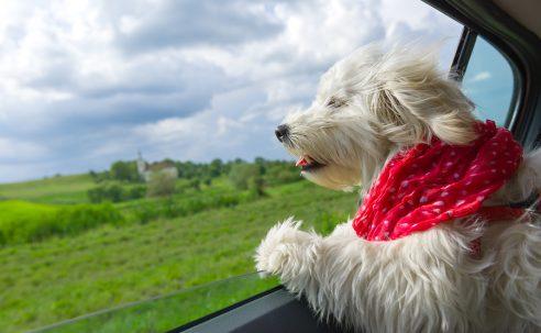 Vier Pfoten auf Reisen – Hundehalter bezüglich Einreisebestimmungen sicher beraten