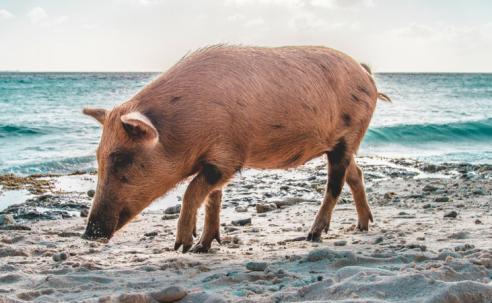 Urlaubsregelungen in der Tierarztpraxis
