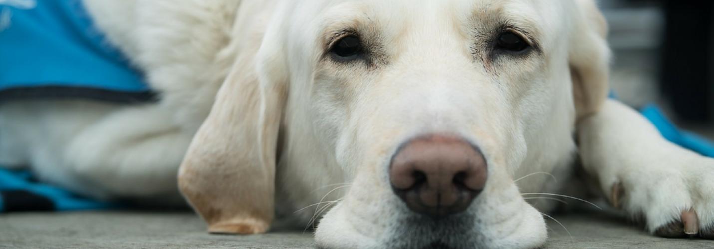 Vom Umgang mit Hund und Katze in der Tierarztpraxis