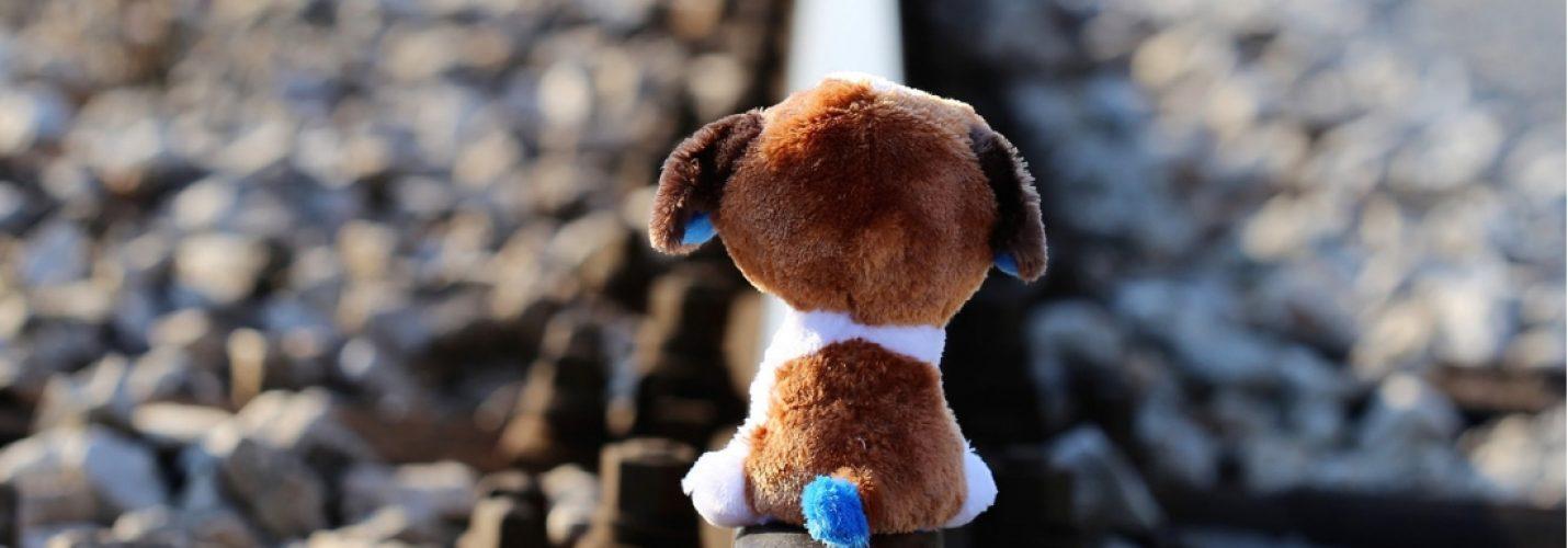 Missbrauch an Tieren gefährdet auch Kinder