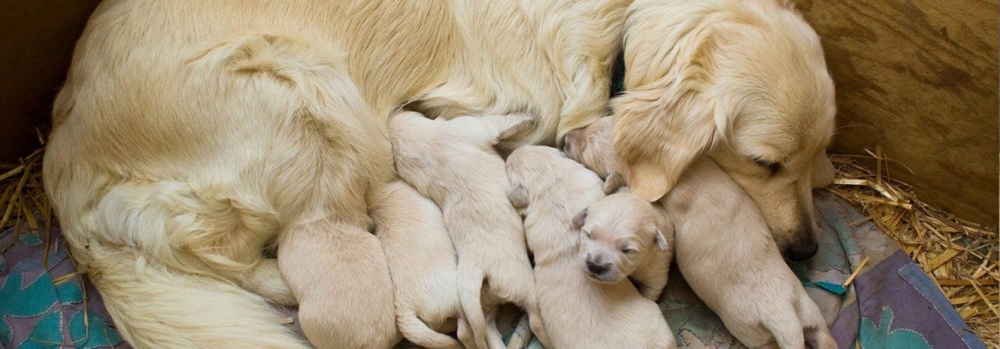 Teratogene Arzneimittel bei Hund und Katze – schwierige Nutzen-Risiko-Bewertung